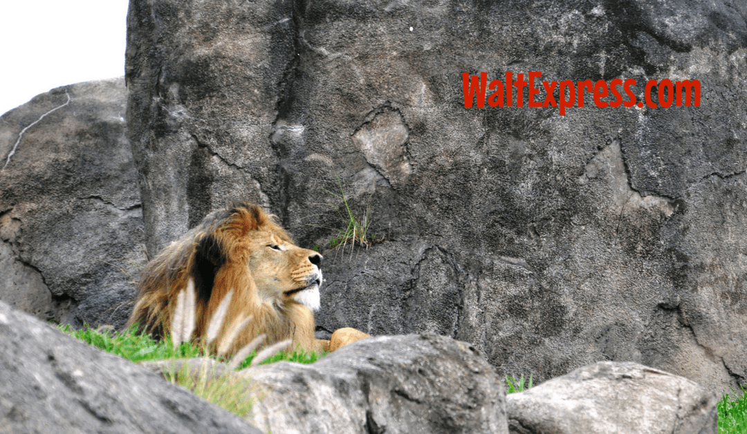 Video: Kilimanjaro Safaris at Animal Kingdom a Disney World Review