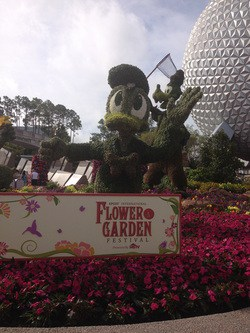 2014 Flower and Garden Festival at Epcot