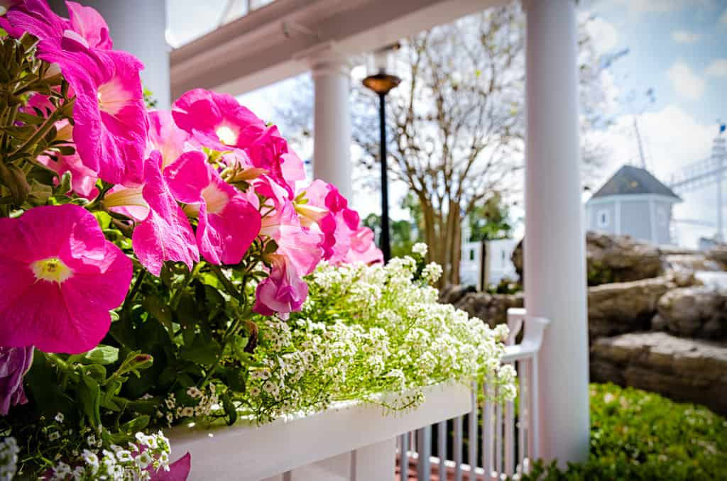 Yacht Club Resort Flowers
