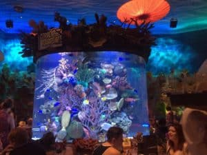Video: T-Rex: Dining with Dinosaurs-A Disney Dining Review