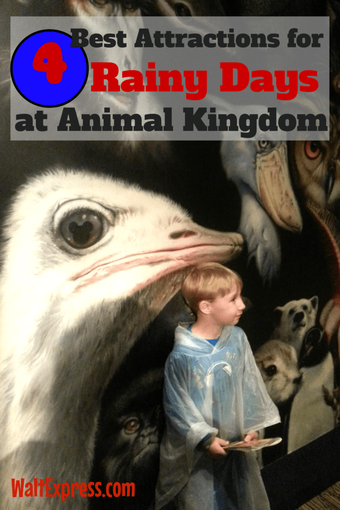 Top 4 Attractions and Rides for Rainy Days at Animal Kingdom