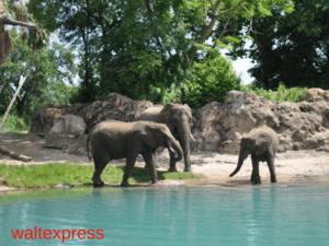 Animal-Kingdom-Kilimanjaro-Safaris