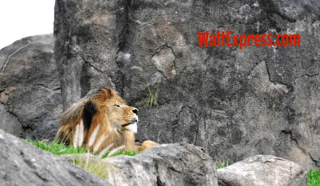 Video: Kilimanjaro Safaris at Animal Kingdom a Disney World Review