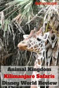 Kilimanjaro-Safaris-Disney-World-Animal-Kingdom