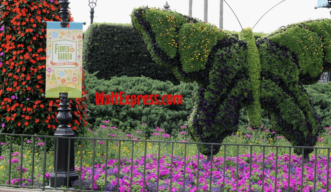 #waltexpress #disneyworld #epcotflowergarden #2019flowergardenfestival #butterfly tent flower garden
