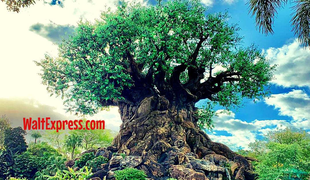 5 Things You Didn't Know You Could Do At Animal Kingdom